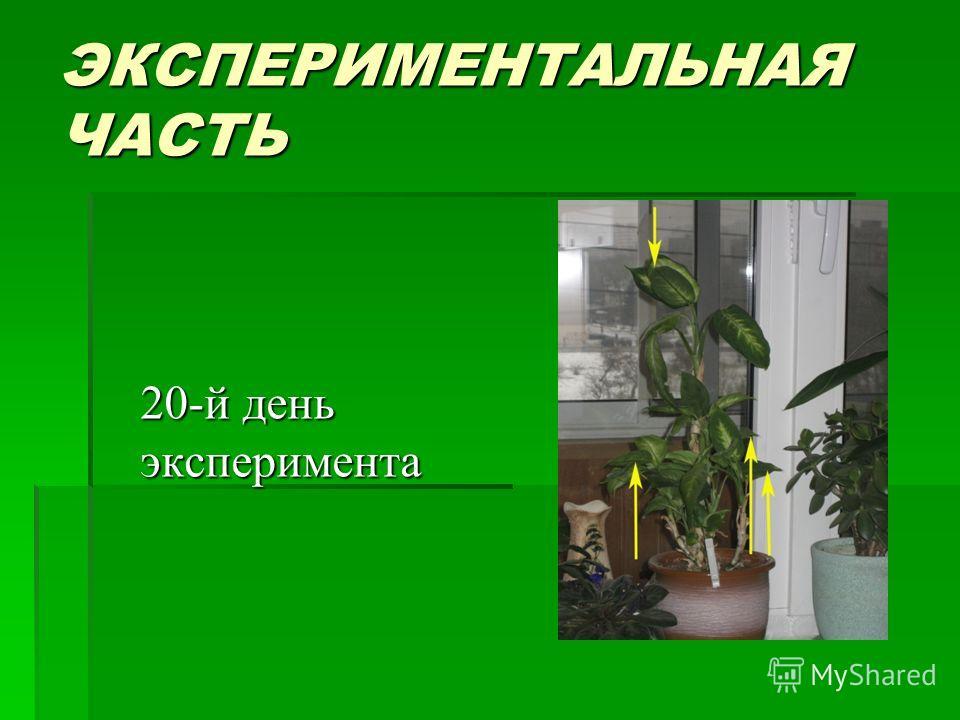 ЭКСПЕРИМЕНТАЛЬНАЯ ЧАСТЬ 20-й день эксперимента 20-й день эксперимента