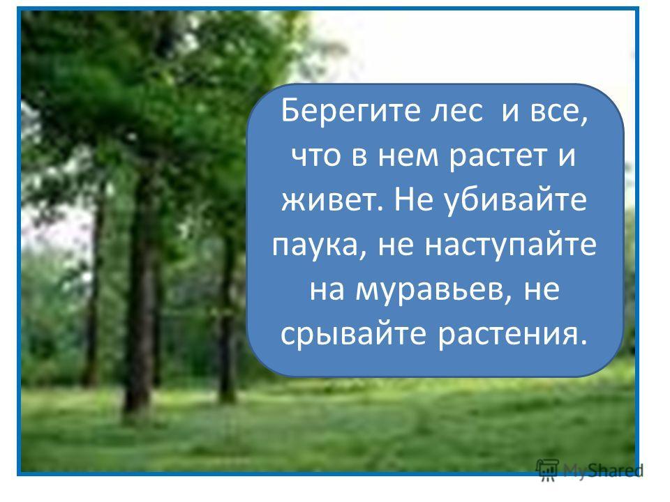 Берегите лес и все, что в нем растет и живет. Не убивайте паука, не наступайте на муравьев, не срывайте растения.