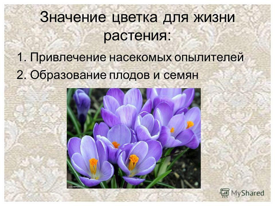 Значение цветка для жизни растения: 1. Привлечение насекомых опылителей 2. Образование плодов и семян