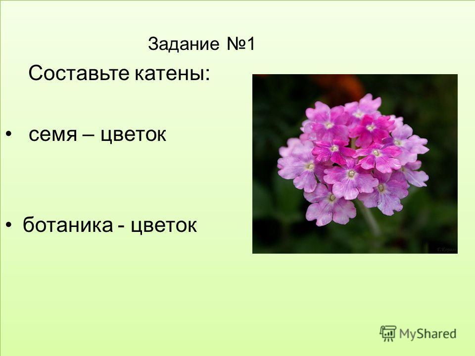 Задание 1 Составьте катены: семя – цветок ботаника - цветок Задание 1 Составьте катены: семя – цветок ботаника - цветок