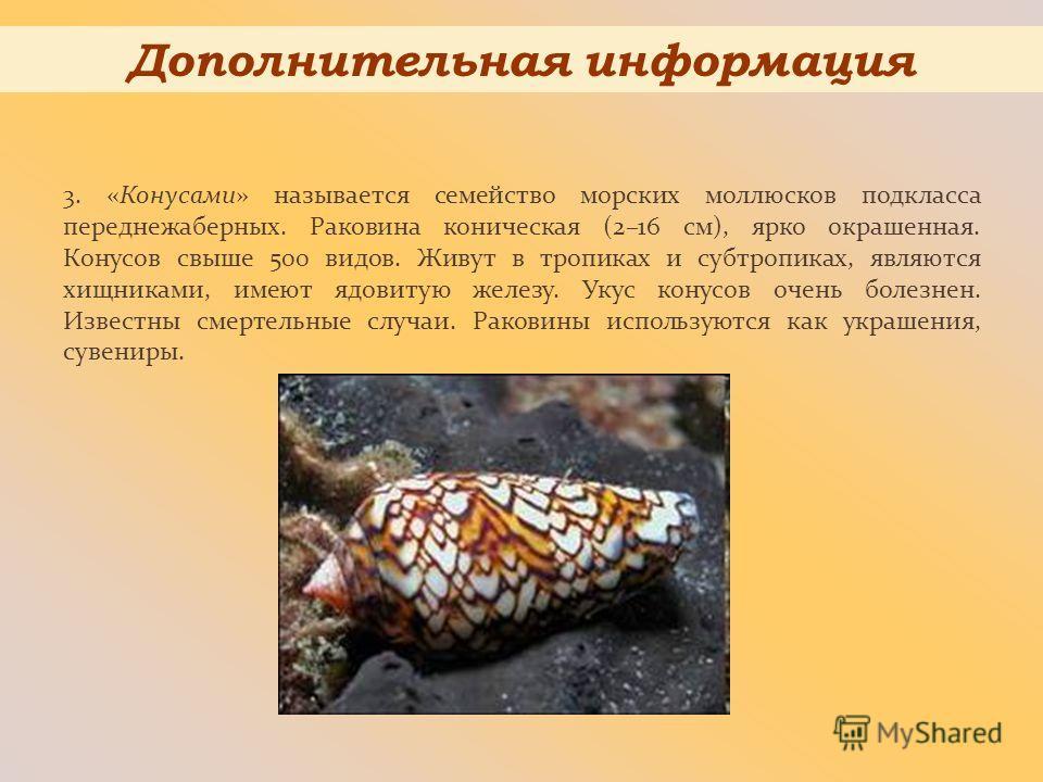 3. «Конусами» называется семейство морских моллюсков подкласса переднежаберных. Раковина коническая (2–16 см), ярко окрашенная. Конусов свыше 500 видов. Живут в тропиках и субтропиках, являются хищниками, имеют ядовитую железу. Укус конусов очень бол