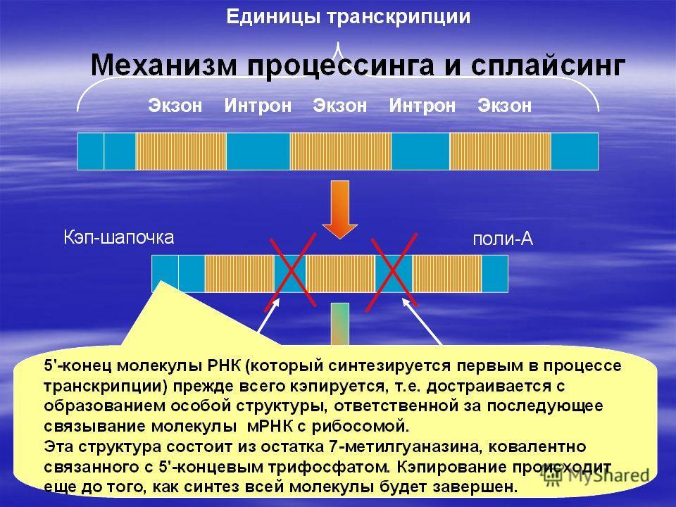 Биохимия  biochemistryru