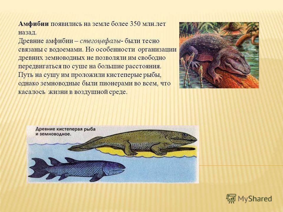 Амфибии появились на земле более 350 млн.лет назад. Древние амфибии – стегоцефалы- были тесно связаны с водоемами. Но особенности организации древних земноводных не позволяли им свободно передвигаться по суше на большие расстояния. Путь на сушу им пр
