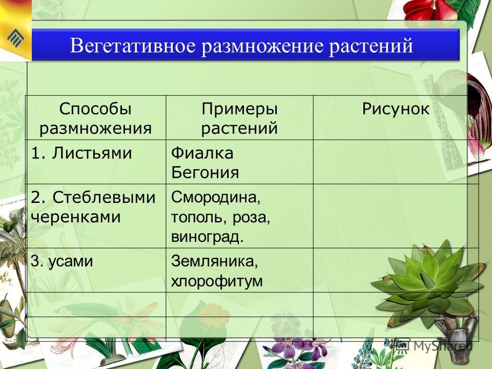 Вегетативное размножение растений Способы размножения Примеры растений Рисунок 1. ЛистьямиФиалка Бегония 2. Стеблевыми черенками Смородина, тополь, роза, виноград. 3. усамиЗемляника, хлорофитум