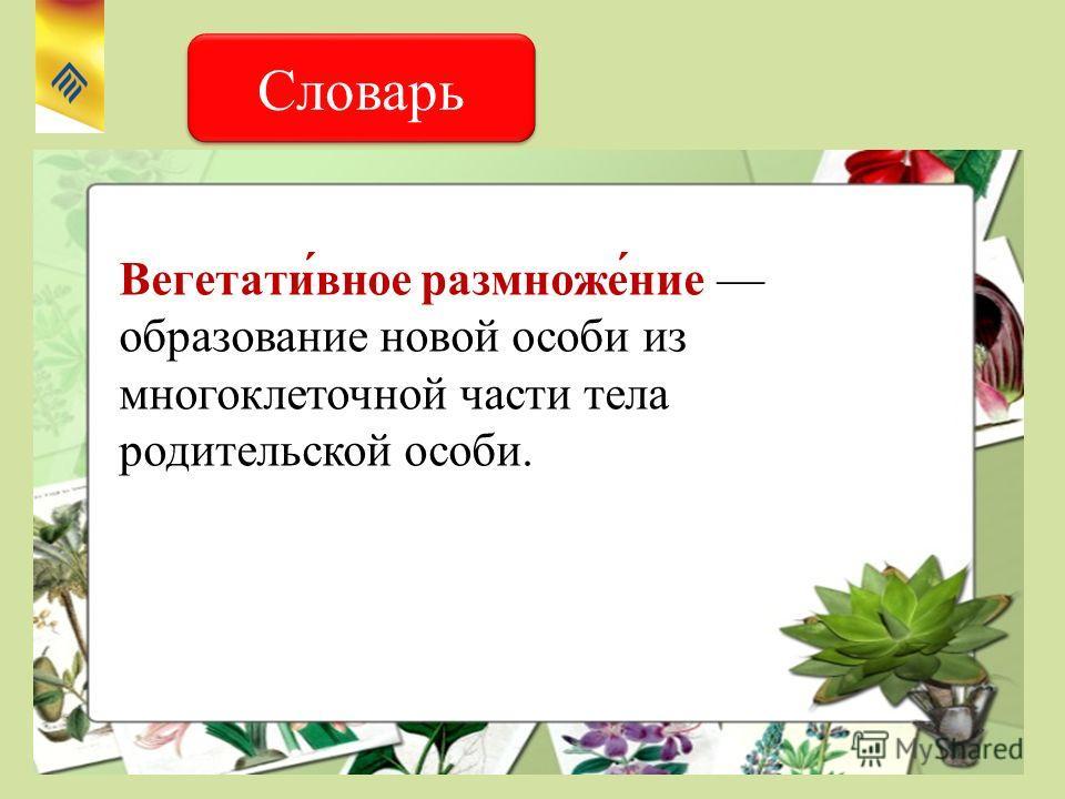 Словарь Вегетати́вное размноже́ние образование новой особи из многоклеточной части тела родительской особи.