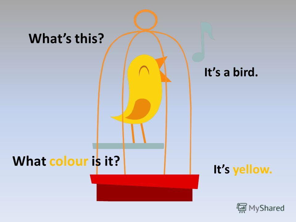 Whats this? Its a bird. What colour is it? Its yellow.