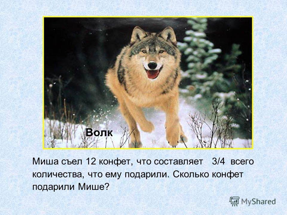 Миша съел 12 конфет, что составляет 3/4 всего количества, что ему подарили. Сколько конфет подарили Мише? Волк