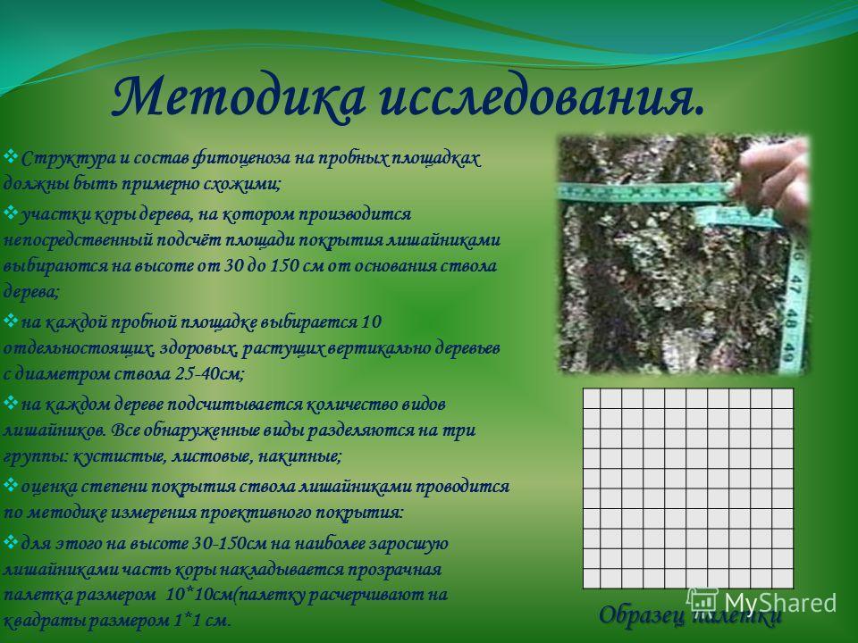 Методика исследования. Структура и состав фитоценоза на пробных площадках должны быть примерно схожими; участки коры дерева, на котором производится непосредственный подсчёт площади покрытия лишайниками выбираются на высоте от 30 до 150 см от основан
