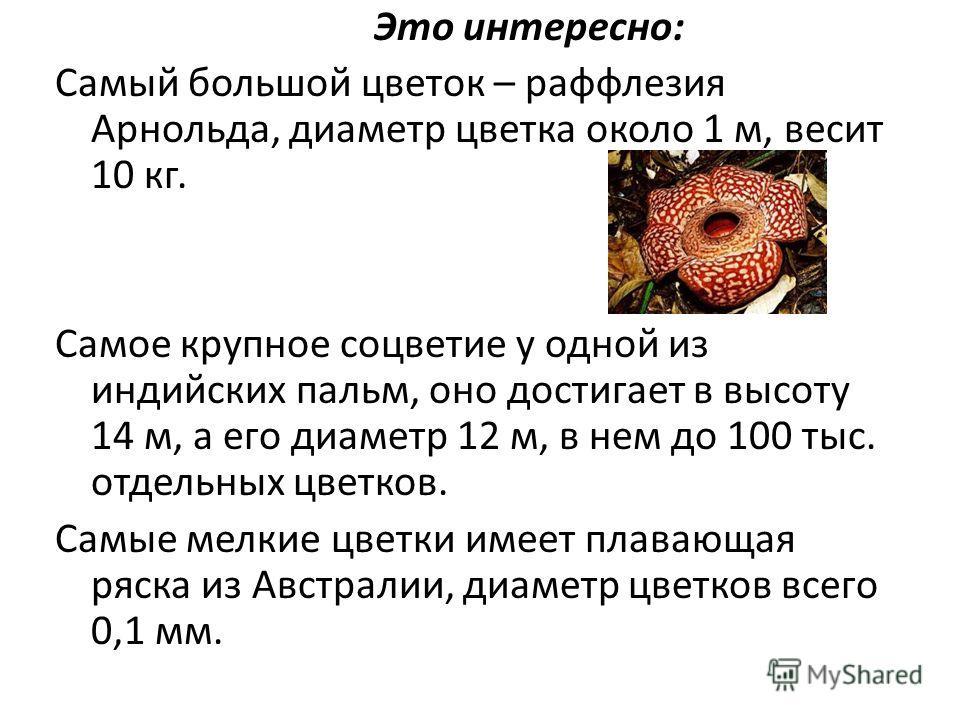 Это интересно: Самый большой цветок – раффлезия Арнольда, диаметр цветка около 1 м, весит 10 кг. Самое крупное соцветие у одной из индийских пальм, оно достигает в высоту 14 м, а его диаметр 12 м, в нем до 100 тыс. отдельных цветков. Самые мелкие цве