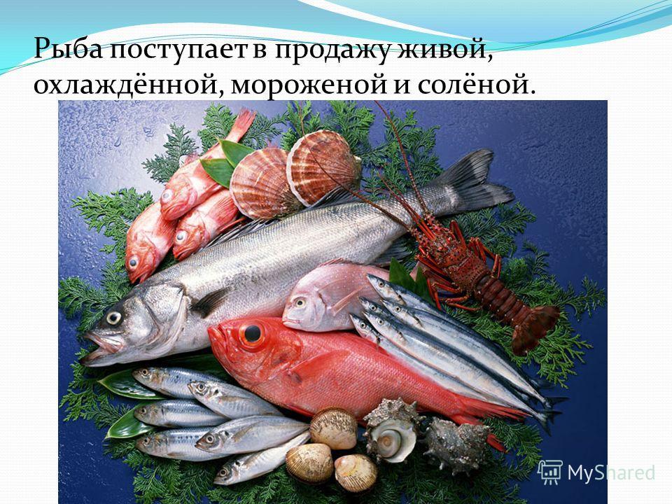 Для обработки рыбы необходимы следующие инструменты и приспособления: нож кухонный, нож-скребок для очистки рыбы от чешуи, а так же отдельная разделочная доска. При обработке рыбы необходимо соблюдать санитарные требования: 1.Рыбу разделывают на спец