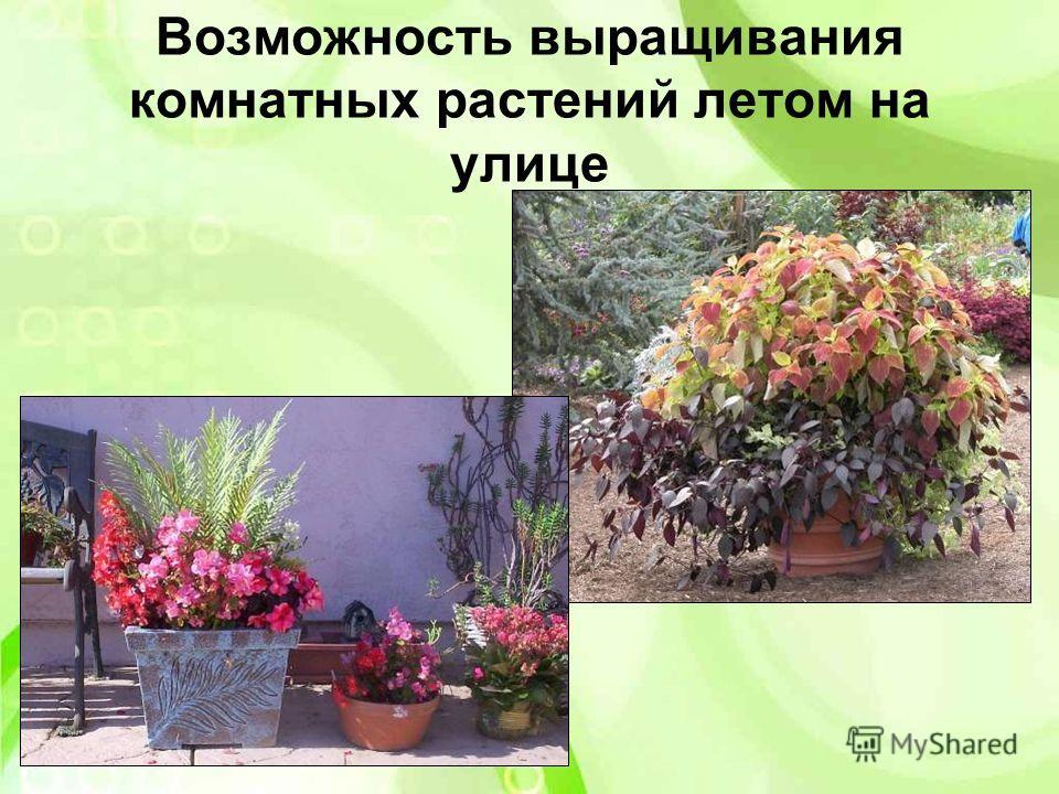 Возможность выращивания комнатных растений летом на улице