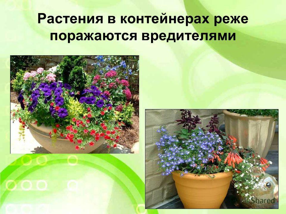 Растения в контейнерах реже поражаются вредителями