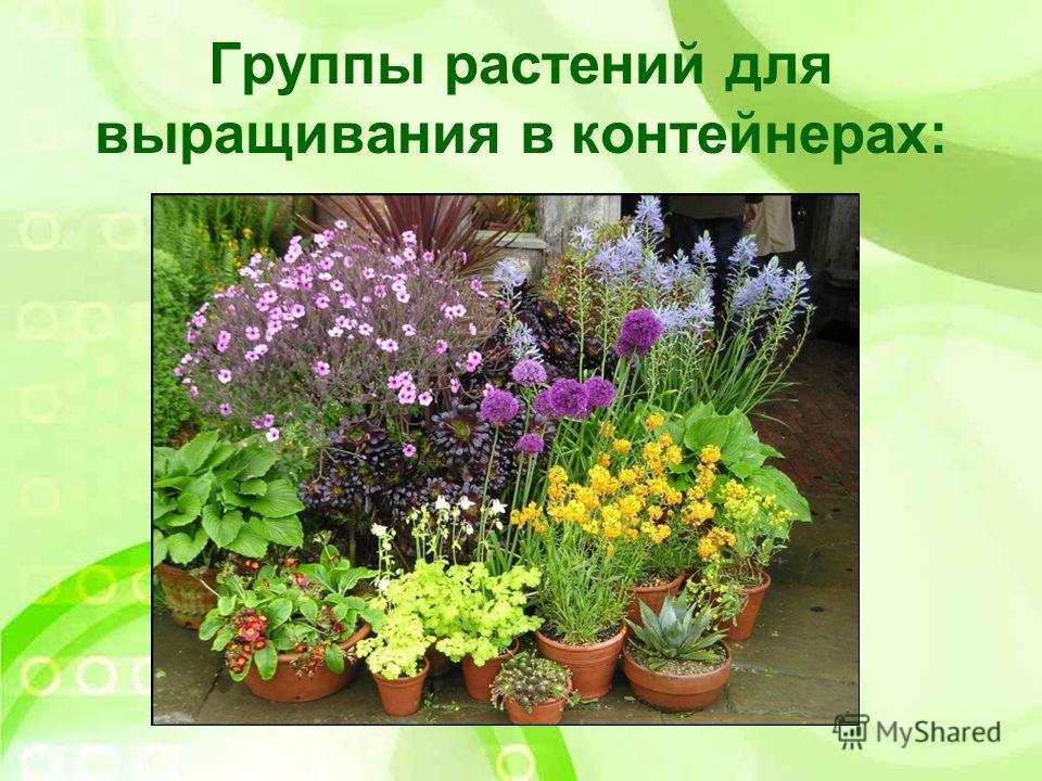 Группы растений для выращивания в контейнерах: