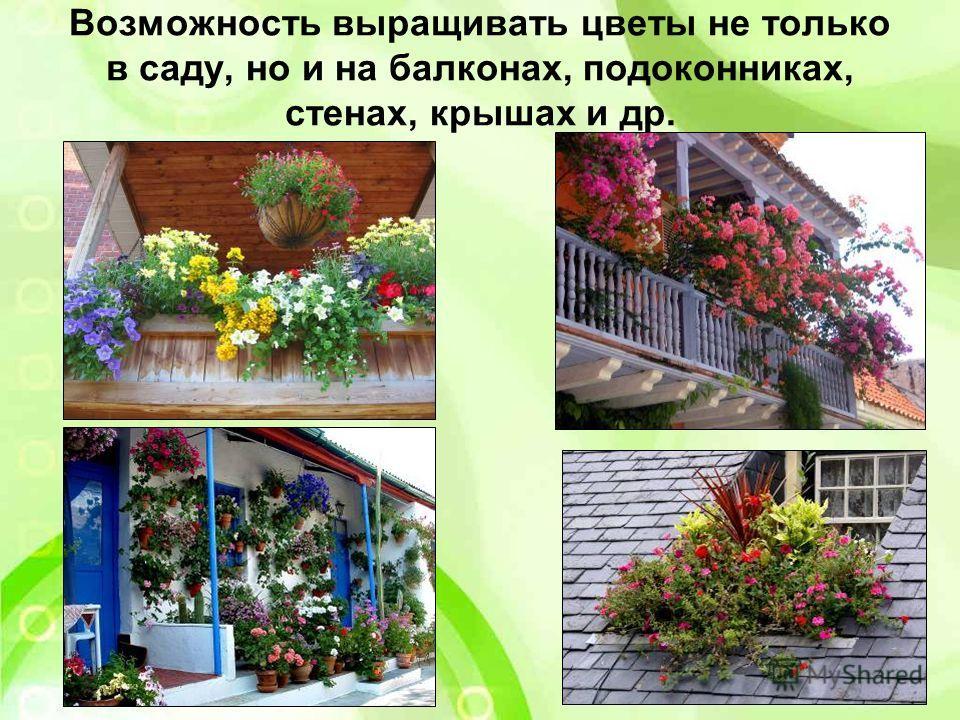 Возможность выращивать цветы не только в саду, но и на балконах, подоконниках, стенах, крышах и др.