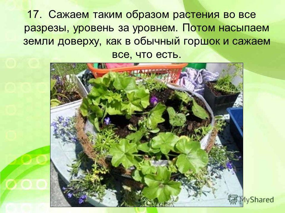 17. Сажаем таким образом растения во все разрезы, уровень за уровнем. Потом насыпаем земли доверху, как в обычный горшок и сажаем все, что есть.