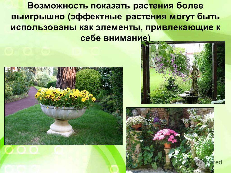 Возможность показать растения более выигрышно (эффектные растения могут быть использованы как элементы, привлекающие к себе внимание)