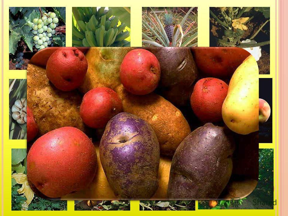 Кушайте, ребята огурцы и дыни - В овощах и фруктах много витаминов. И растите сильными, Умными, весёлыми. Ешьте витамины - Будете здоровыми!.