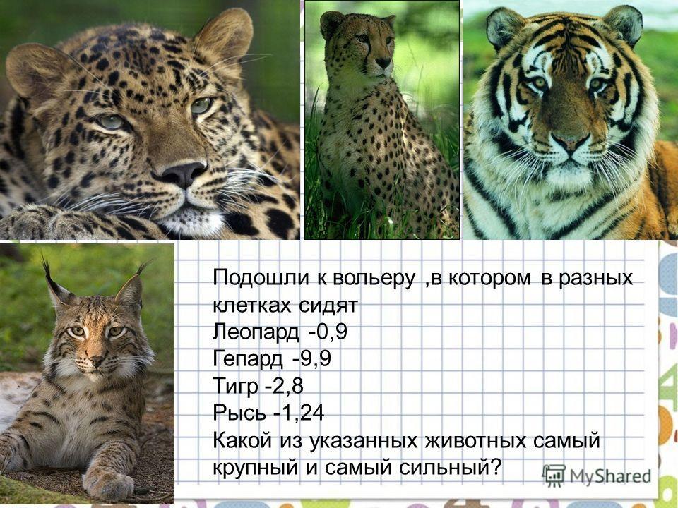 Подошли к вольеру,в котором в разных клетках сидят Леопард -0,9 Гепард -9,9 Тигр -2,8 Рысь -1,24 Какой из указанных животных самый крупный и самый сильный?
