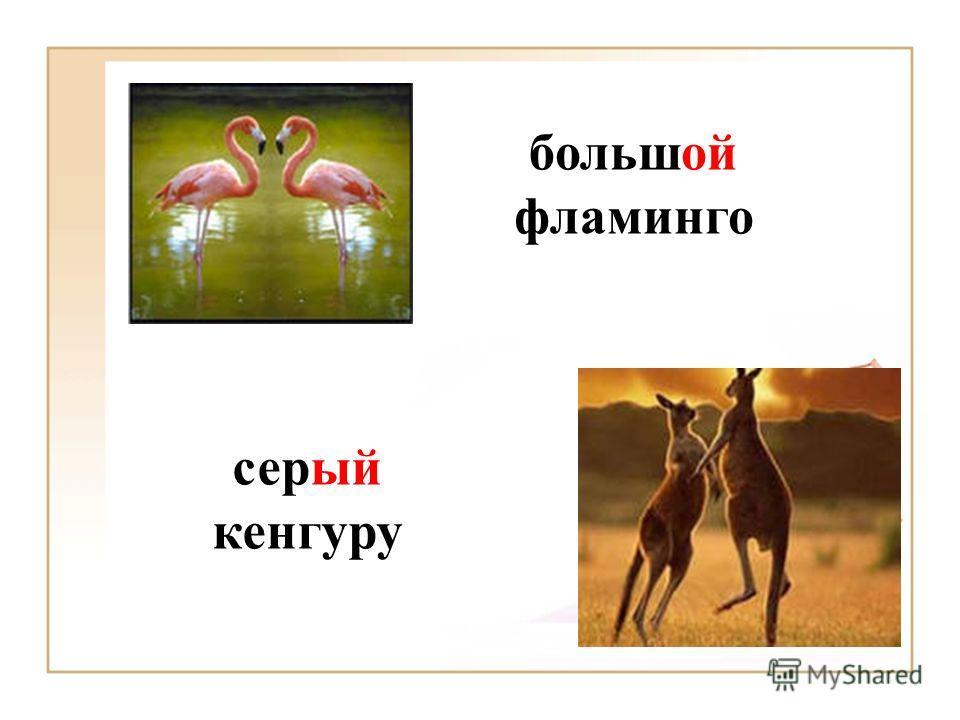 серый кенгуру большой фламинго