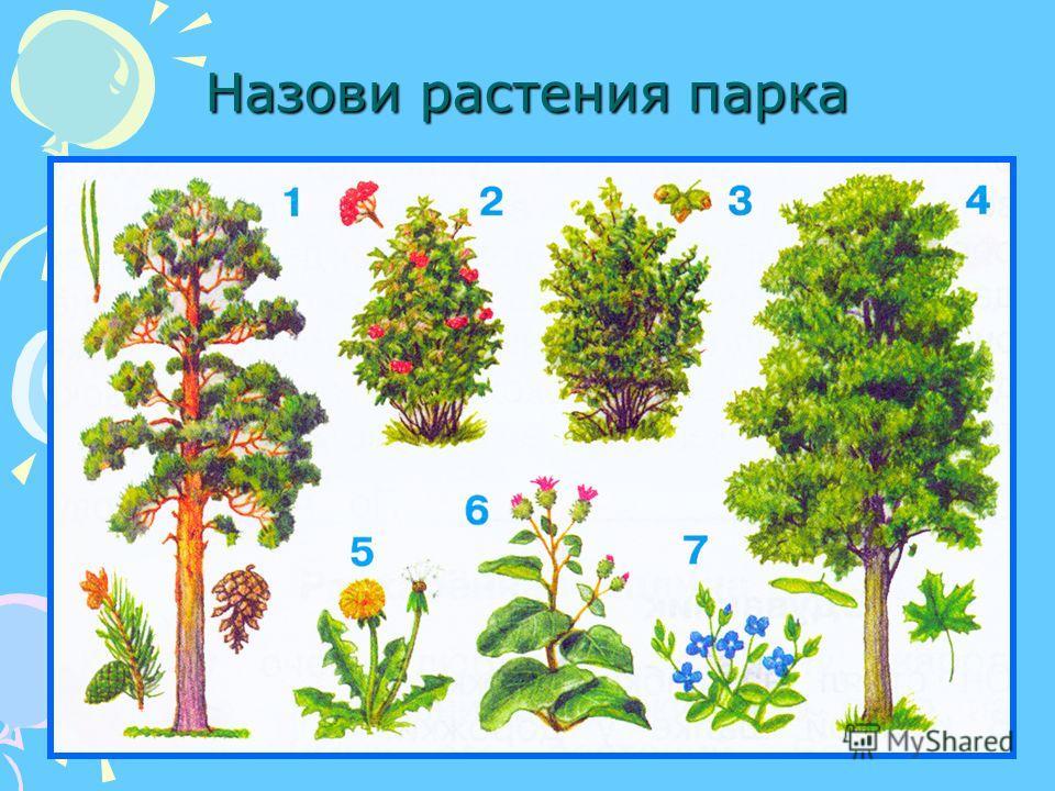 Назови растения парка
