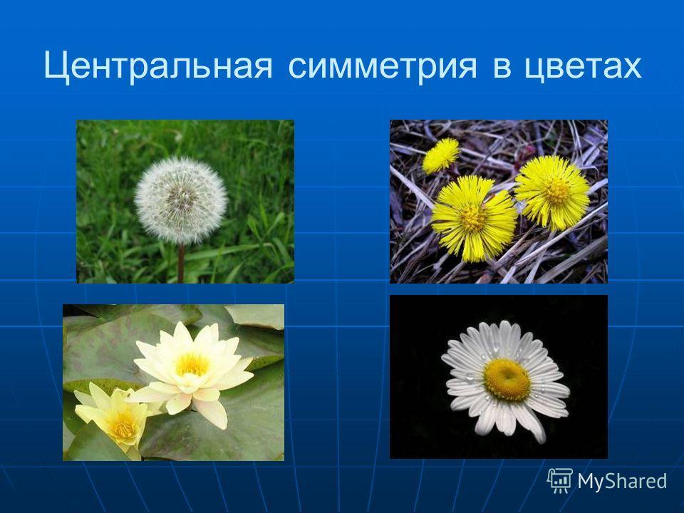 Центральная симметрия в цветах