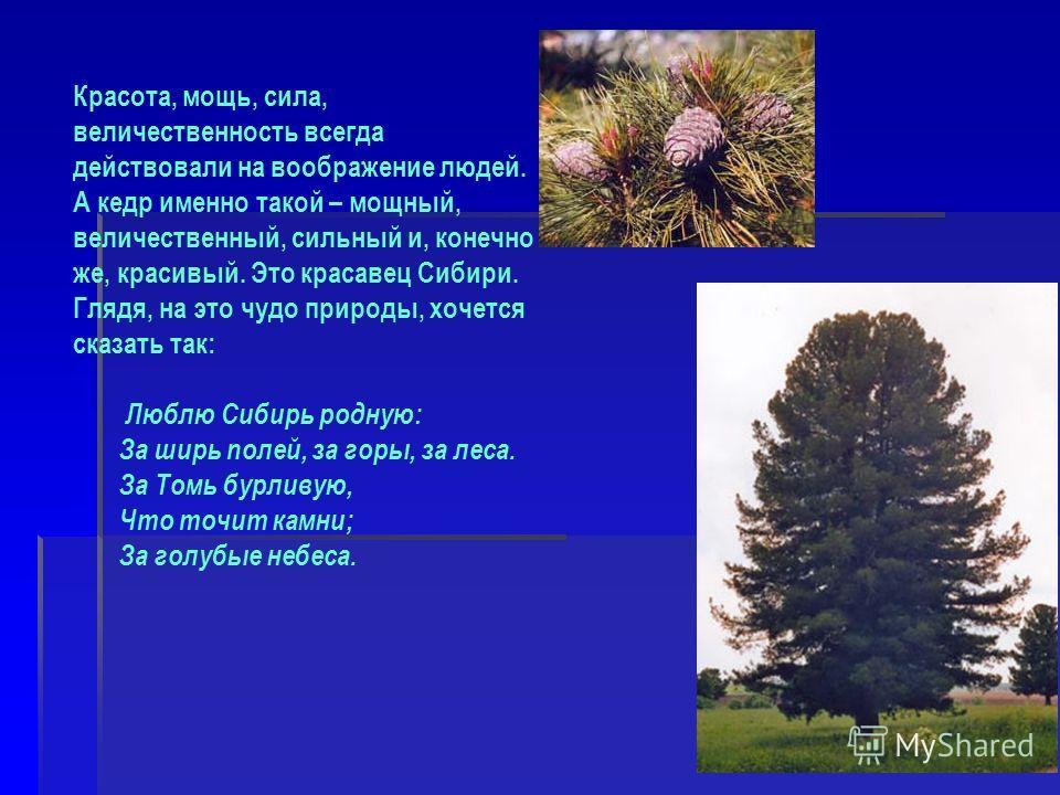Красота, мощь, сила, величественность всегда действовали на воображение людей. А кедр именно такой – мощный, величественный, сильный и, конечно же, красивый. Это красавец Сибири. Глядя, на это чудо природы, хочется сказать так: Люблю Сибирь родную: З