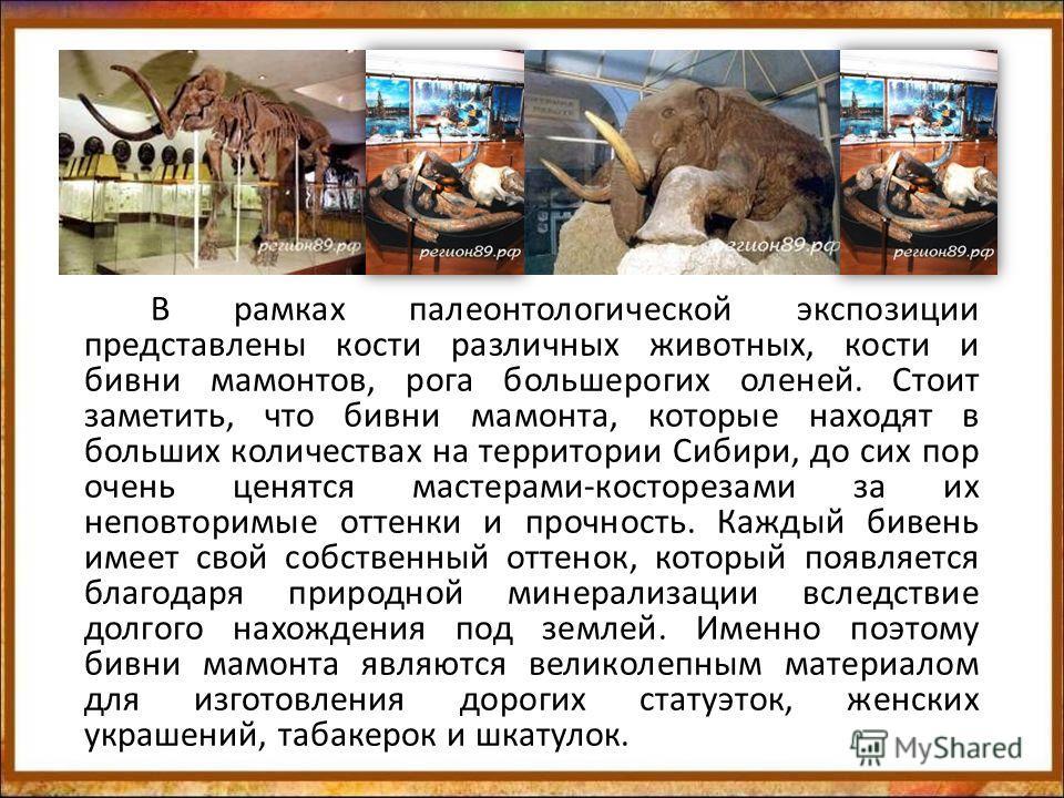 В рамках палеонтологической экспозиции представлены кости различных животных, кости и бивни мамонтов, рога большерогих оленей. Стоит заметить, что бивни мамонта, которые находят в больших количествах на территории Сибири, до сих пор очень ценятся мас
