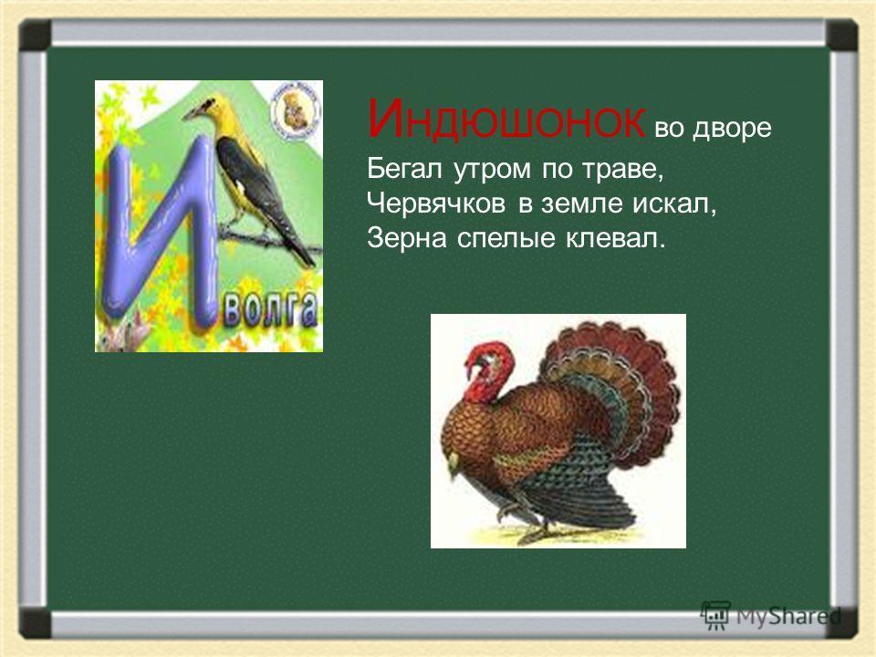 И НДЮШОНОК во дворе Бегал утром по траве, Червячков в земле искал, Зерна спелые клевал.