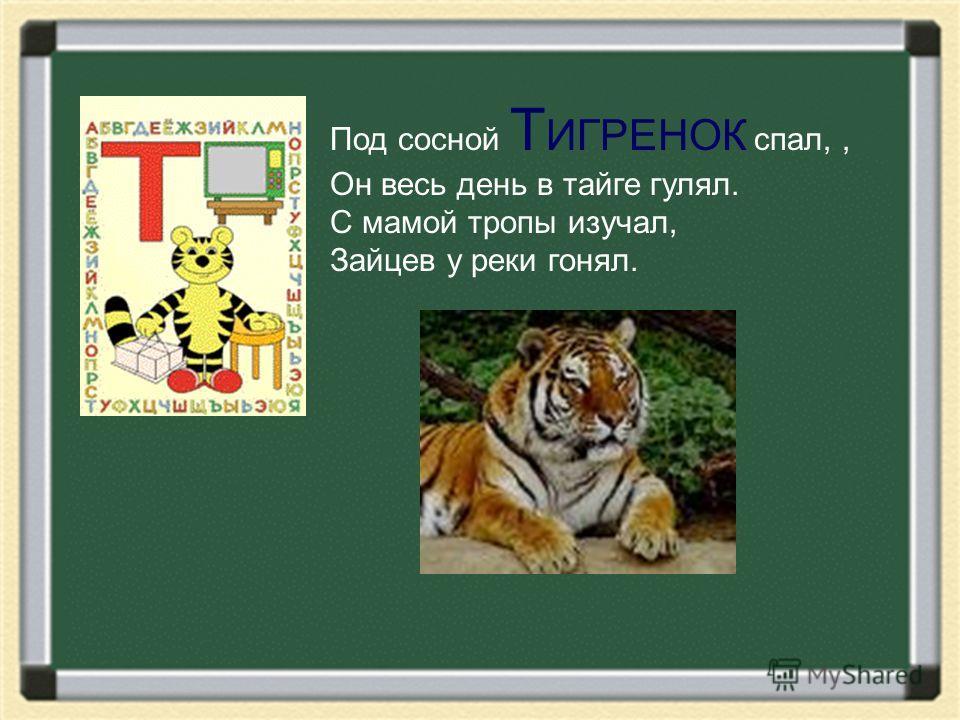 Под сосной Т ИГРЕНОК спал,, Он весь день в тайге гулял. С мамой тропы изучал, Зайцев у реки гонял.