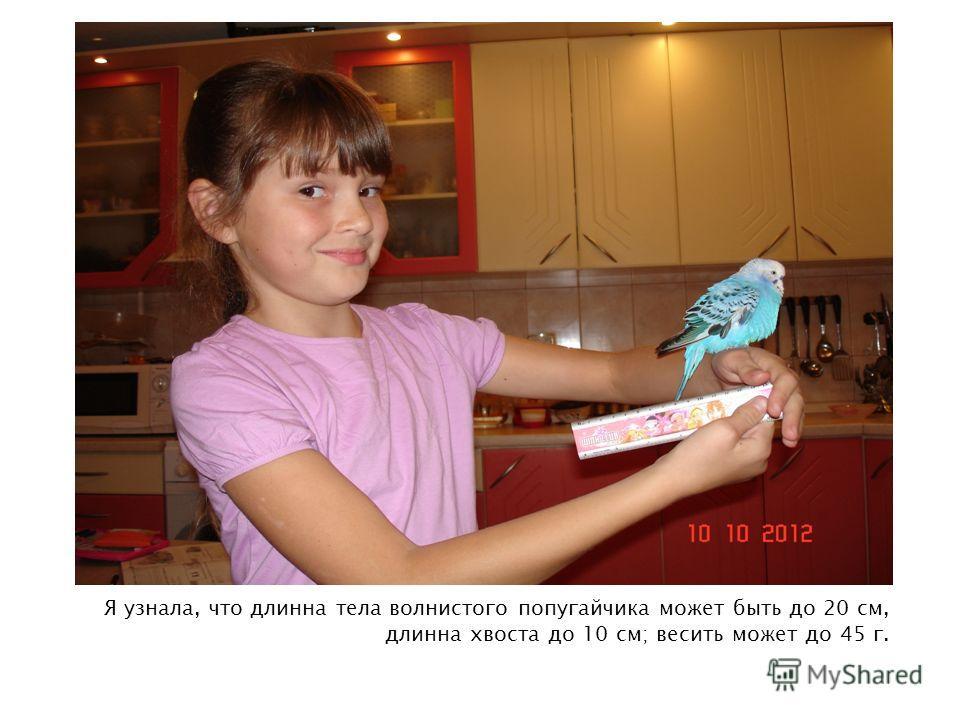 Я узнала, что длинна тела волнистого попугайчика может быть до 20 см, длинна хвоста до 10 см; весить может до 45 г.