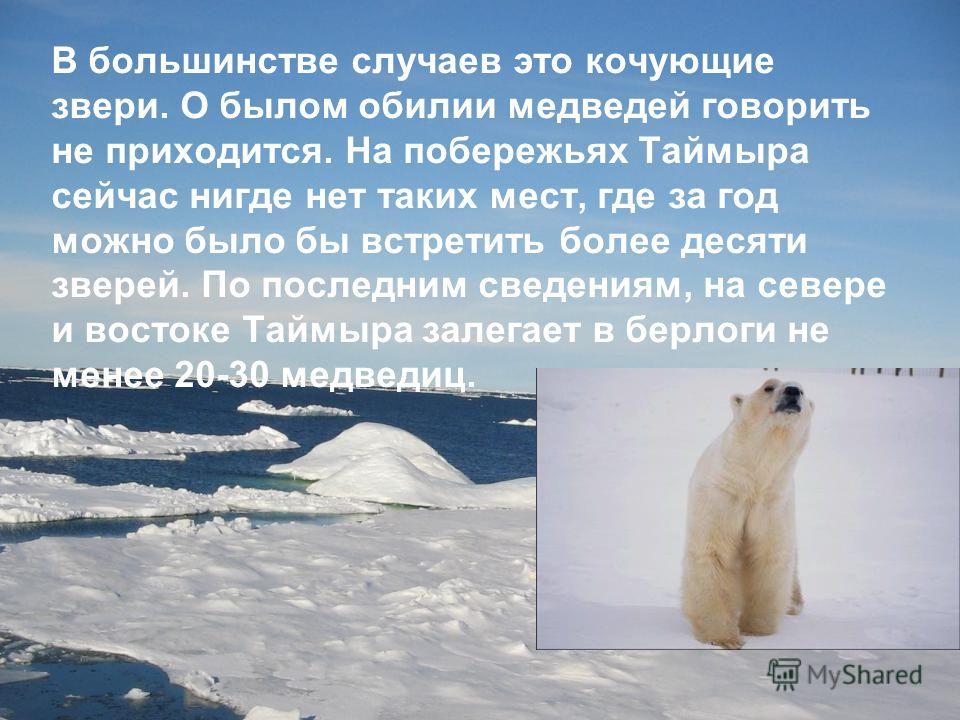 В большинстве случаев это кочующие звери. О былом обилии медведей говорить не приходится. На побережьях Таймыра сейчас нигде нет таких мест, где за год можно было бы встретить более десяти зверей. По последним сведениям, на севере и востоке Таймыра з