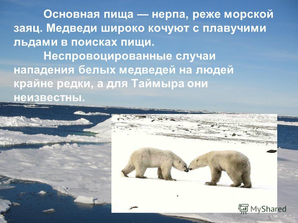 Основная пища нерпа, реже морской заяц. Медведи широко кочуют с плавучими льдами в поисках пищи. Неспровоцированные случаи нападения белых медведей на людей крайне редки, а для Таймыра они неизвестны.