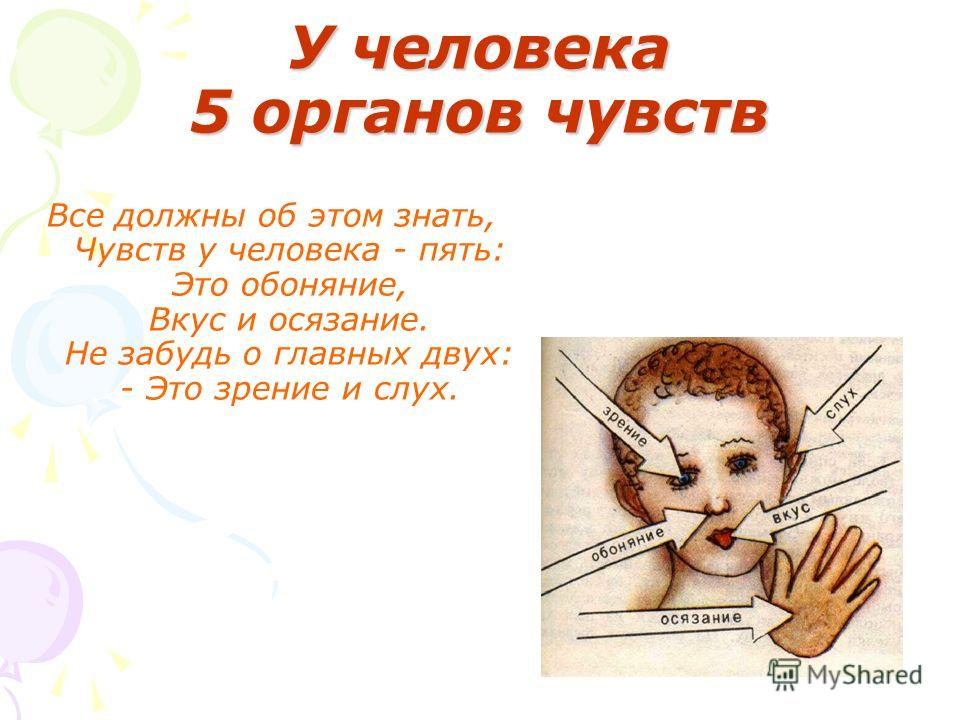 У человека 5 органов чувств Все должны об этом знать, Чувств у человека - пять: Это обоняние, Вкус и осязание. Не забудь о главных двух: - Это зрение и слух.