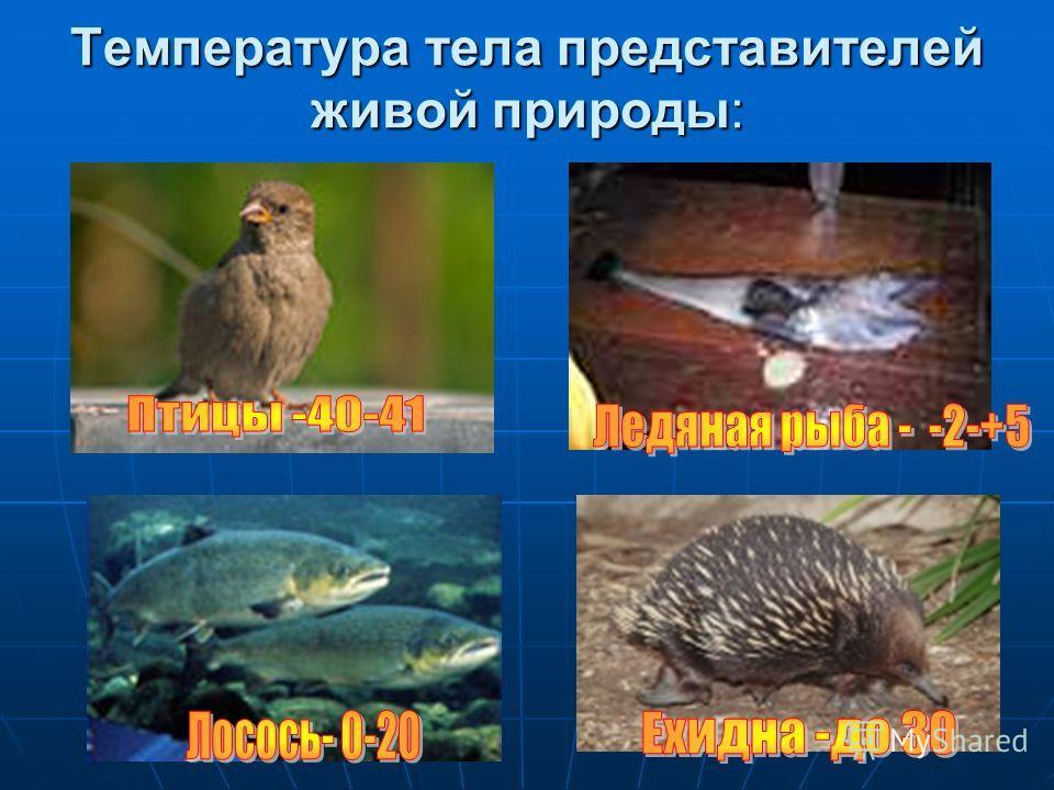 Температура тела представителей живой природы: