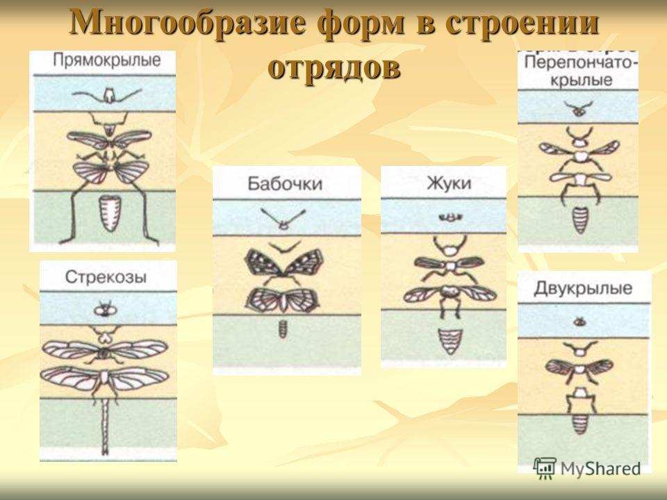 Многообразие форм в строении отрядов