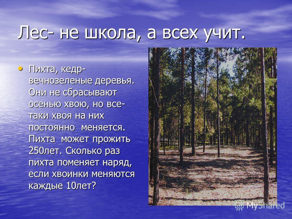 Лес- не школа, а всех учит. Пихта, кедр- вечнозеленые деревья. Они не сбрасывают осенью хвою, но все- таки хвоя на них постоянно меняется. Пихта может прожить 250лет. Сколько раз пихта поменяет наряд, если хвоинки меняются каждые 10лет? Пихта, кедр-