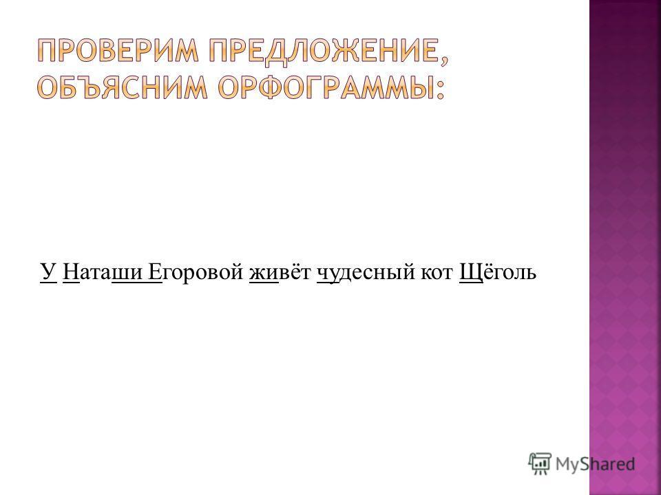 У Наташи Егоровой живёт чудесный кот Щёголь