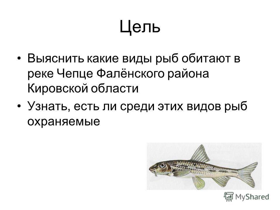 Цель Выяснить какие виды рыб обитают в реке Чепце Фалёнского района Кировской области Узнать, есть ли среди этих видов рыб охраняемые