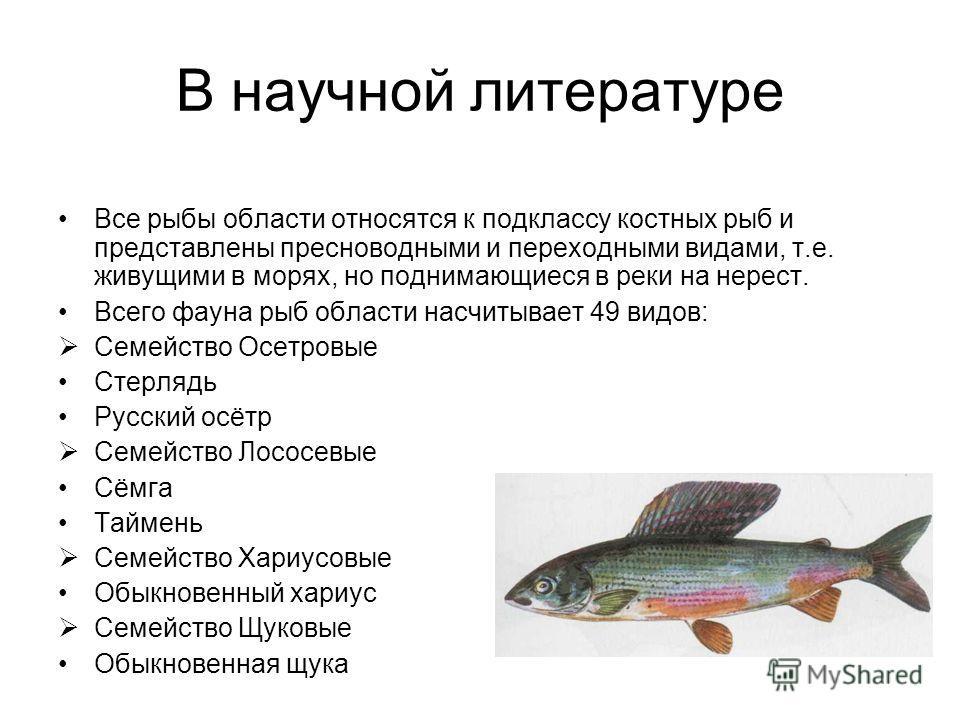 В научной литературе Все рыбы области относятся к подклассу костных рыб и представлены пресноводными и переходными видами, т.е. живущими в морях, но поднимающиеся в реки на нерест. Всего фауна рыб области насчитывает 49 видов: Семейство Осетровые Сте