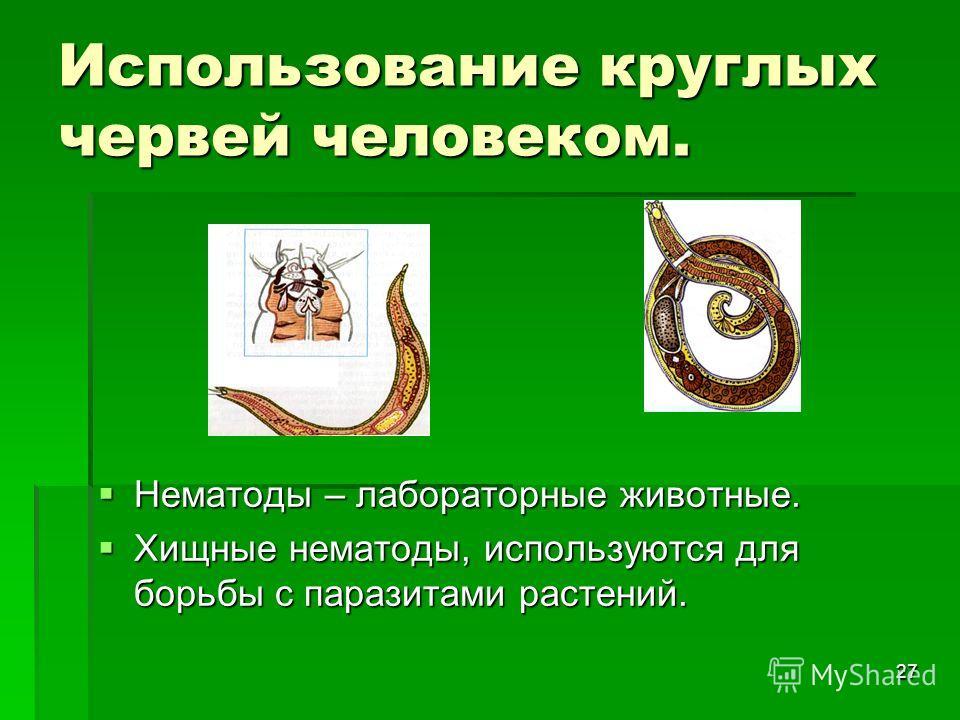 27 Использование круглых червей человеком. Нематоды – лабораторные животные. Нематоды – лабораторные животные. Хищные нематоды, используются для борьбы с паразитами растений. Хищные нематоды, используются для борьбы с паразитами растений.