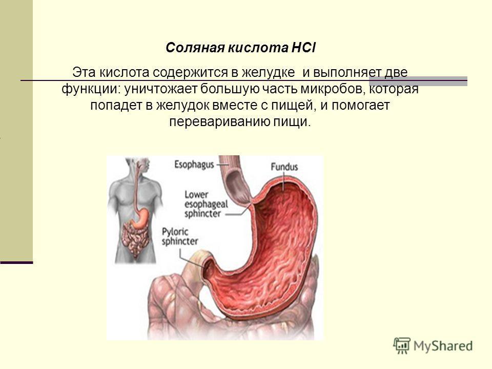 Соляная кислота НCl Эта кислота содержится в желудке и выполняет две функции: уничтожает большую часть микробов, которая попадет в желудок вместе с пищей, и помогает перевариванию пищи.