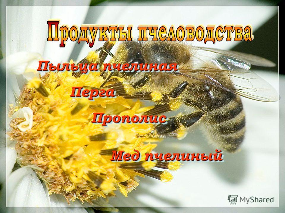Пыльца пчелиная Перга Перга Прополис Прополис Мед пчелиный Мед пчелиный