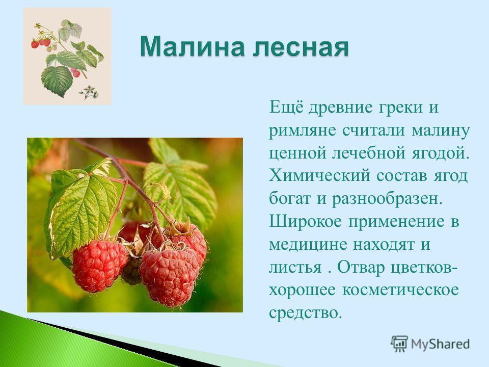 Ещё древние греки и римляне считали малину ценной лечебной ягодой. Химический состав ягод богат и разнообразен. Широкое применение в медицине находят и листья. Отвар цветков- хорошее косметическое средство.