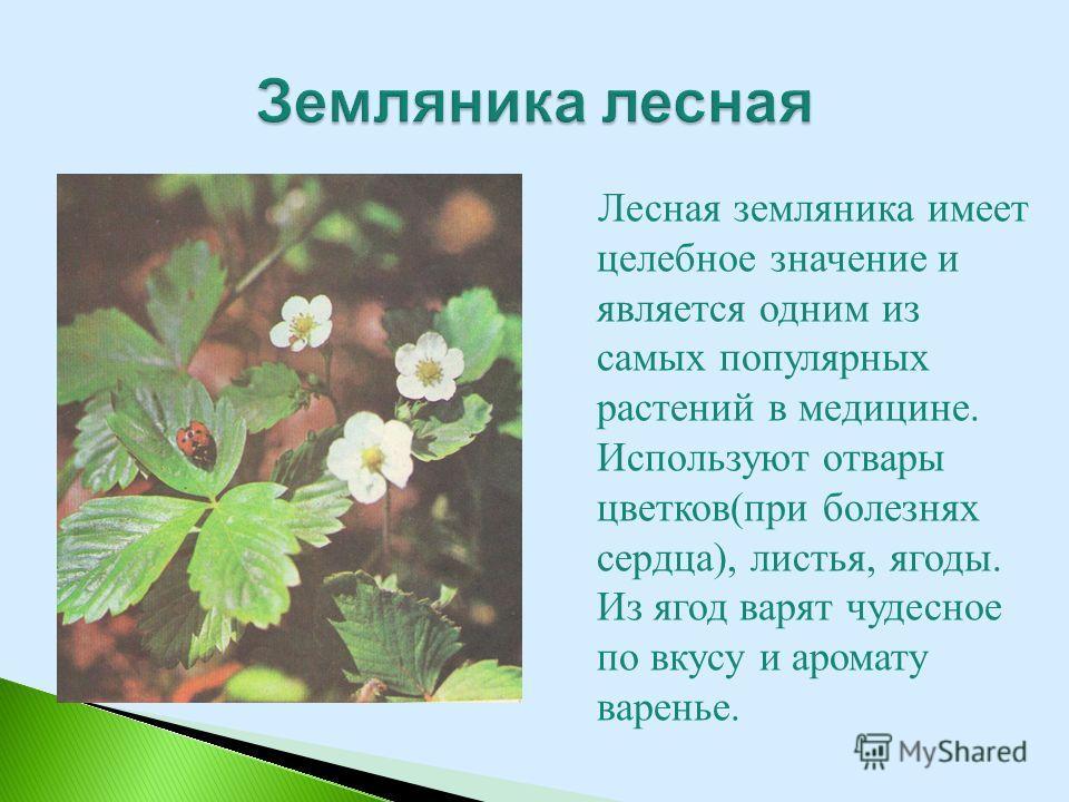 Лесная земляника имеет целебное значение и является одним из самых популярных растений в медицине. Используют отвары цветков(при болезнях сердца), листья, ягоды. Из ягод варят чудесное по вкусу и аромату варенье.
