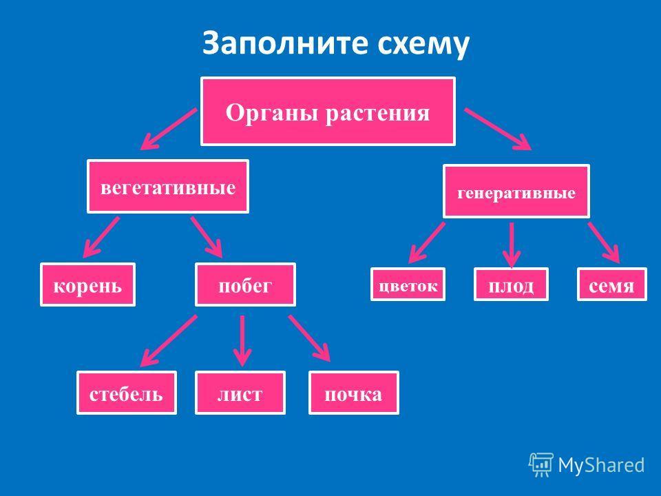 Заполните схему Органы