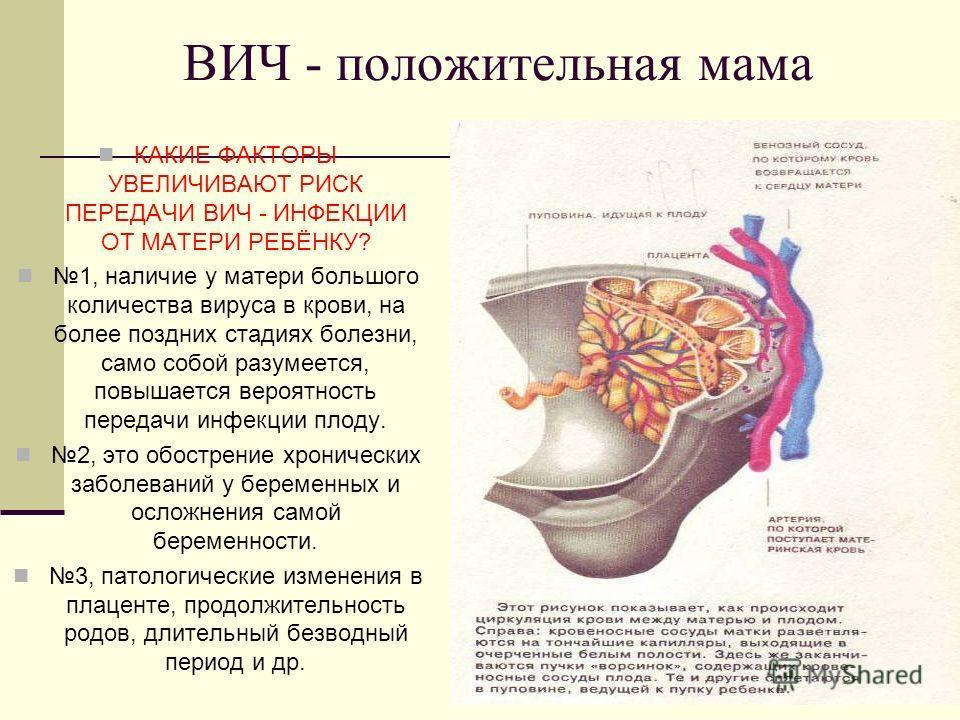 ВИЧ - положительная мама КАКИЕ ФАКТОРЫ УВЕЛИЧИВАЮТ РИСК ПЕРЕДАЧИ ВИЧ - ИНФЕКЦИИ ОТ МАТЕРИ РЕБЁНКУ? 1, наличие у матери большого количества вируса в крови, на более поздних стадиях болезни, само собой разумеется, повышается вероятность передачи инфекц