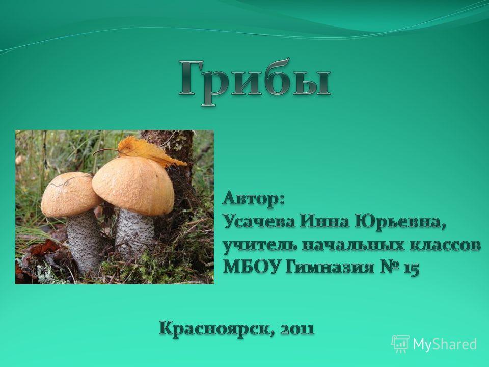 Грибы съедобные грибы белый гриб