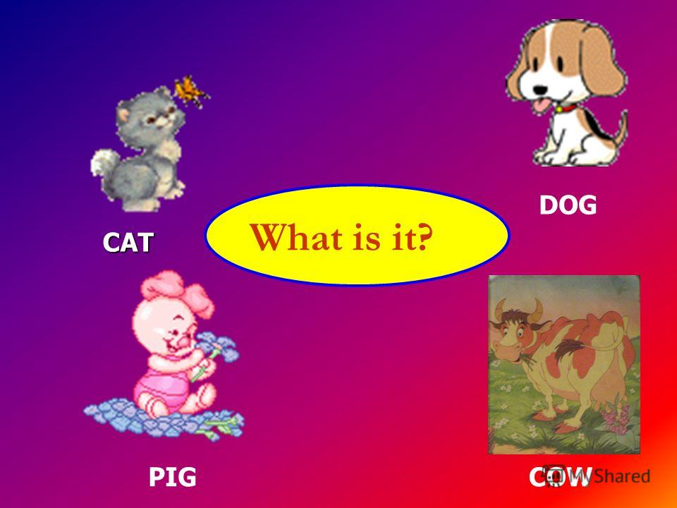 What is it? CAT CAT COW DOG PIG