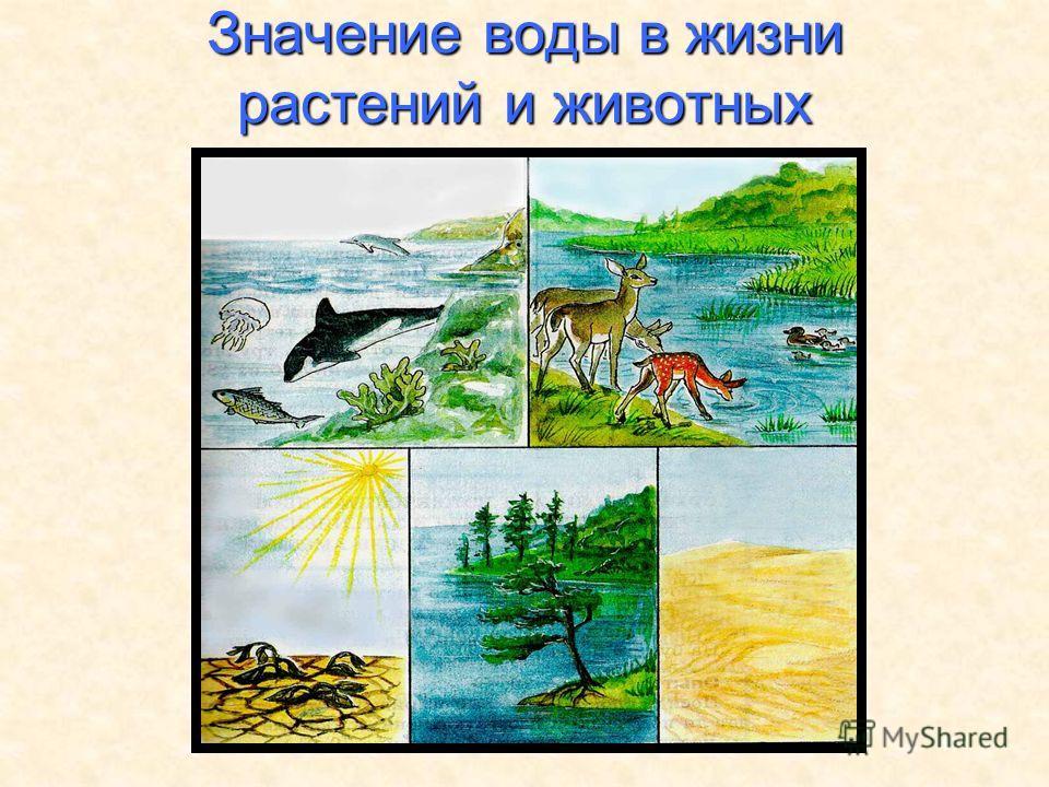 47 Значение воды в жизни растений и животных