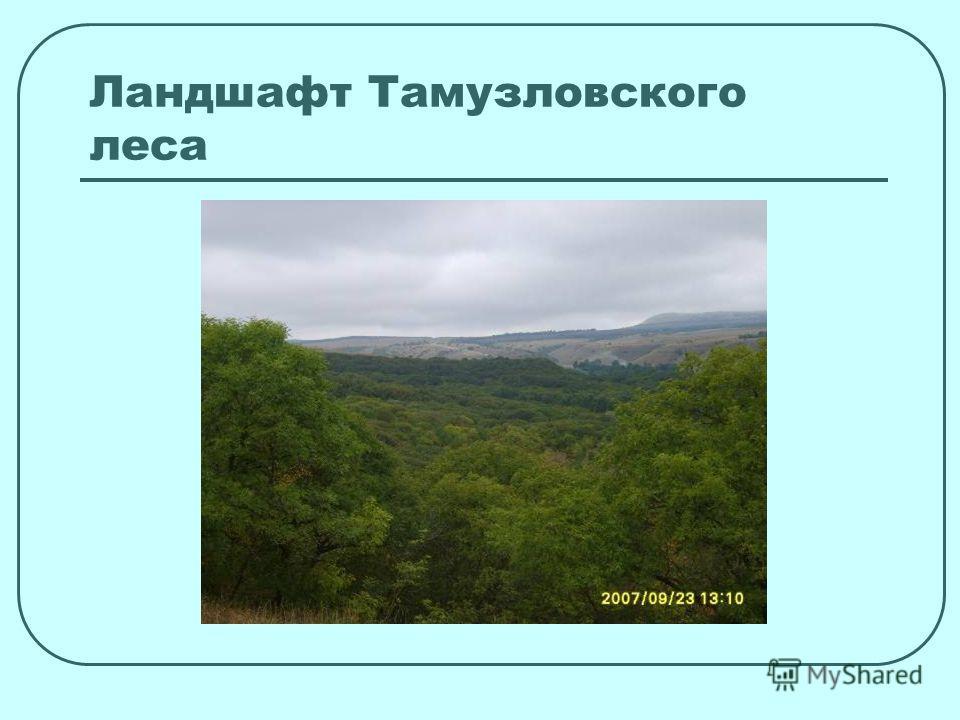 Ландшафт Тамузловского леса
